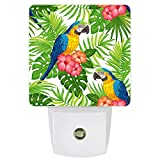 LED Night Light Red Flowers Green Tropical Plants and Parrot in Jungle Automatic On/Off Sensor,Plug in Night Light for Bedroom, Bathroom, Kitchen, Kids Room 11.5x7.5x5cm
