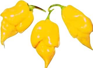 1000 Trinidad Scorpion Yellow Pepper Seeds ***WHOLESALE*** ORIGINAL-STRAIN