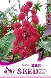 Pinkdose® 2018 Heißer Verkauf 5 Original Packs, 6 Samen/Pack, rote Rizinus Pflanzen, Kräuter Ricinus Communis