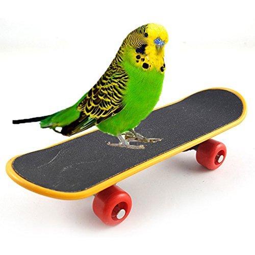 Vogel Papageien Intelligenz Spielzeug Mini Training Skateboard für Papageien Wellensittiche Sittiche Nymphensittiche, Kleine und mittelgroße Vögel, lustiges Sitzstangen-Spielzeug