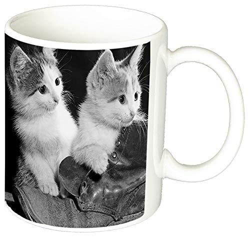 Gatitos Gatos Kittens Cats Tasse Mug