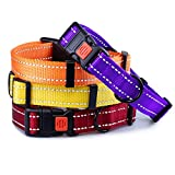 CollarDirect Reflective Dog Collar, Safety Nylon Collars for Dogs with Buckle, Outdoor Adjustable Puppy Collar Small Medium Large (Neck Fit 18'-26', Orange)
