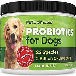 Bestes Hundefutter für ältere Hunde mit empfindlichen Mägen