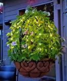 Scroll Trellis Topiary Frame and Indoor/Outdoor Solar LED String Lights with a Battery Backup (2 Black, 2 Sets Warm White Solar Lights)
