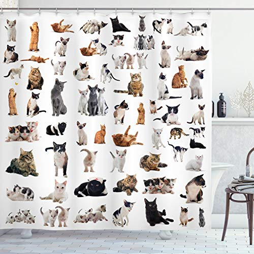 Ambesonne Cat Lover Shower Curtain, Group of Cats and Kitten Lying Down Meowing Purebred Norwegian Siamese, Cloth Fabric Bathroom Decor Set with Hooks, 70' Long, Marigold White