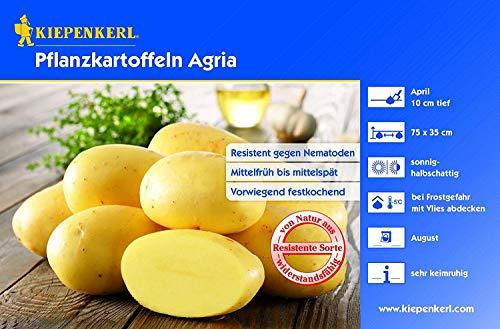 Pflanzkartoffeln Agria, Inhalt: 5 kg
