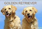 Golden Retriever ein treuer Begleiter (Wandkalender 2020 DIN A3 quer)