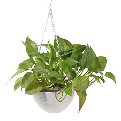 HMANE Hanging Flower Plant Pot, Chain Plastic Basket Planter Holder Patio Home Decoration - 7.87x7.87x5.51inch