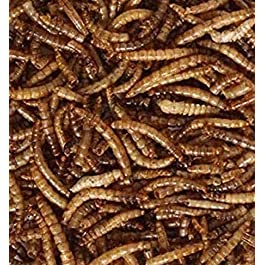 Maltbys' Stores 1904 Limited 200g DRIED MEALWORMS WILD BIRD FOOD