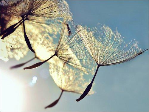 Holzbild 80 x 60 cm: Pusteblume - Freiheit von Julia Delgado