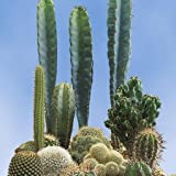 Suttons Seeds 106463 Prickly Characters Samen