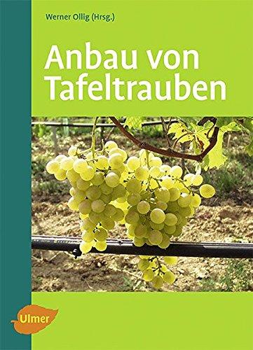 Anbau von Tafeltrauben