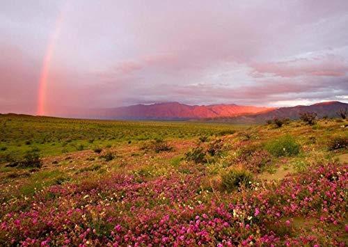 Rainbow Landscape After Rain Puzzles 200 Piezas Para Adultos Niños Juegos Para Niños Juguetes Educativos