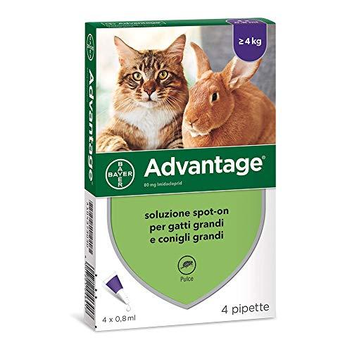 Advantage Soluzione Spot-On Gatti/Con. 4 Pipette, 0.8 ml
