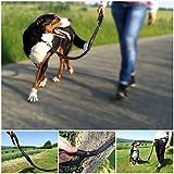 Premium Jogging-Leine | Sichere Metall-Komponenten | Umweltfreundliche Verpackung | Softer Neopren-Bauchgurt | 2 Gratis Booklets | Pets'nDogs - 6