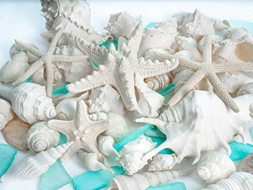 Nautical Crush Trading Sea Shells Real Buy Online In Bahamas At Desertcart