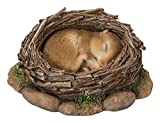 Real Life Woodland Dormouse Asle...