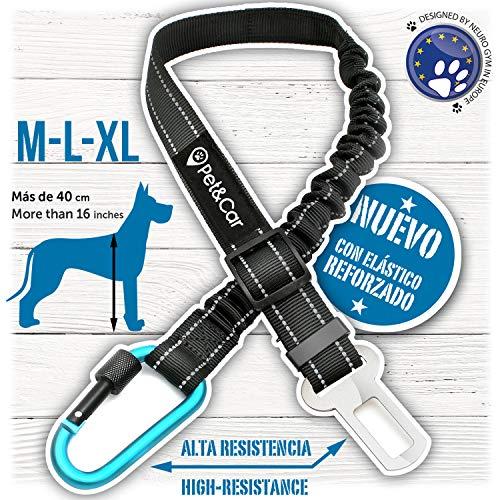 Cinturón de seguridad extensible para arnés de perro. Previene lesiones de mascota en coche por su correa elástica, mosquetón resistente y ligero con cierre de seguridad (Grande - Mediano (M - L - XL)