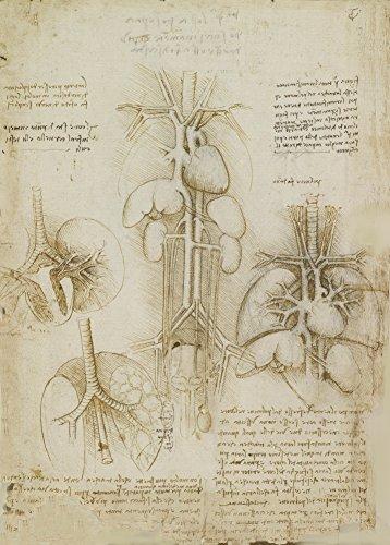 World of Art Global Vintage Anatomie Leonardo da Vinci Untersuchung des Herzens, der Lunge, der Leber und der Milz, Italien, 14-15 Jahrhundert. 250 g/m², glänzend, Kunstdruck, A3, Reproduktion