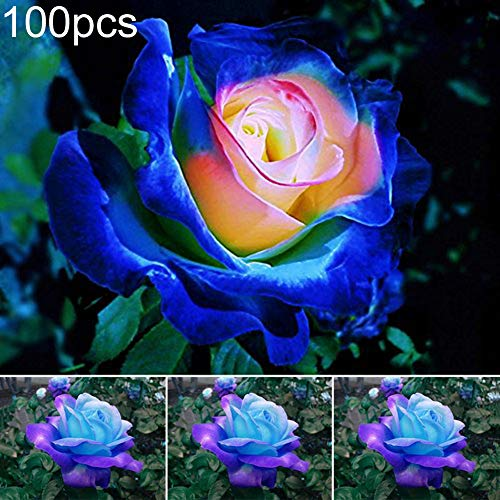 good01 100Pcs Plantas Decorativas Semillas De Flores para Plantar, Sem