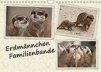 Erdmaennchen Familienbande (Wandkalender 2022 DIN A4 quer): Naturfotos der in Familien lebenden Erdmaennchen (Monatskalender, 14 Seiten )
