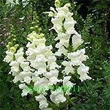 honic 100 pc/bag snapdragon, (anthirrhinum majus), bonsai snapdragon fiore, la crescita naturale per il giardino di casa: 365.016