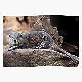 Heeled Adelaide Otter Zoo Das eindrucksvollste und