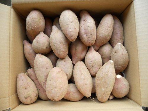 予約1割増量 種子島産秀品安納芋紅Sサイズ5kg入り