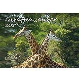 Jirafa mágica · DIN A4· Premium Calendario 2019· jirafa · Jirafas · África · Animales · Wildnis · Natural · Set de regalo con 1tarjeta de felicitación y 1Tarjeta de Navidad (· Edition Alma mágica