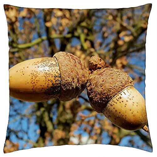 N\A Cojín Cojín Roble Quercus Robur English Oak Tree Nuts Macro