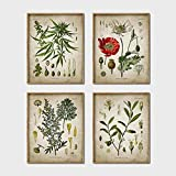 Carteles botánicos Vintage amapola coca planta de drogas recreativas arte de pared decoración de farmacia pintura regalo médico sin marco-30X40cmX4