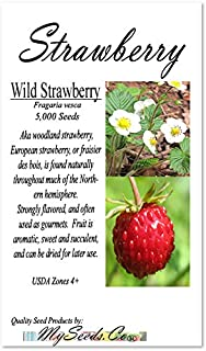 Big Pack - Wild Strawberry, Fragaria vesca Seeds - Non-GMO Seeds (Strawberry, Wild (5,000 Seeds))