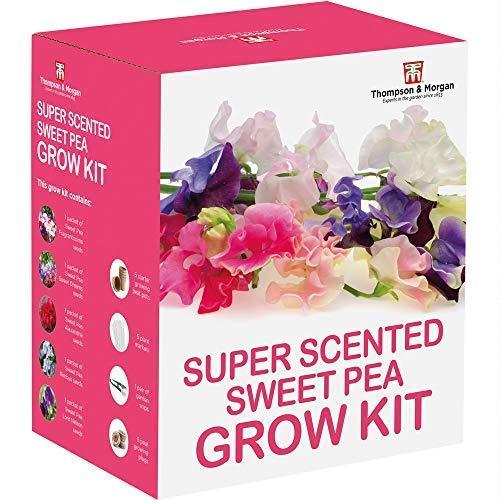 Thompson & Morgan Grow Kits Cadeau Boîtes - Pois de Senteur
