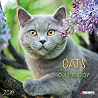 Cats Outdoors 2020 (Wonderful World)