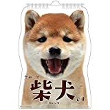 アクティブコーポレーション 2020年 カレンダー 犬 柴犬 壁掛け 柴犬です ACL-65