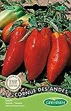 Germisem Cornue de Andes Semillas de Tomate 0.2 g (EC8001)