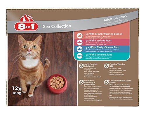 8in1 Katze Nassfutter Sea Collection ( für erwachsene Katzen ab 1 Jahr, verschiedene Sorten Fisch in Sauce), 12 x 100 g Frischebeutel, 1er Pack (1 x 1.2 kg)