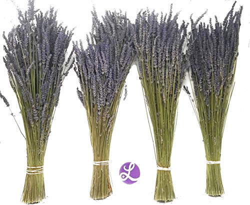 Findlavender - Lavender Dried Premium Bundles - 18' to 22' - 130 to 150 Stems - Can Be Used for Any Ocassion - Perfect for Your Wedding - 4 Bundles
