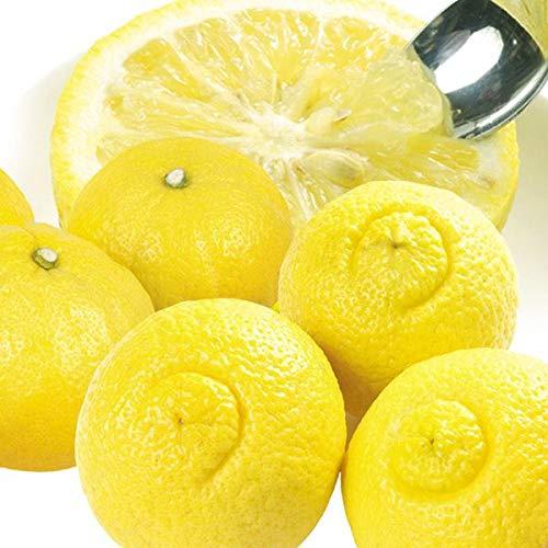 国華園 食品 和歌山産 ご家庭用 はるか 5�s1箱 柑橘