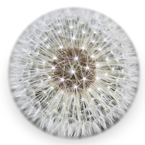 Dandelion Paperweight - Made fro...