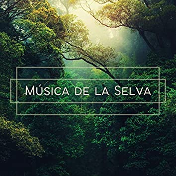 Música de la Selva: Sonidos de la Naturaleza, Instrumentos Indígenas