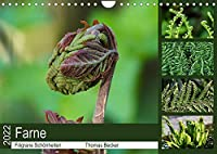 Farne - Filigrane Schoenheiten (Wandkalender 2022 DIN A4 quer): Farne - Faszinierende Pflanzen (Monatskalender, 14 Seiten )