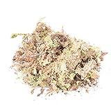 1Pack 12L Sphagnum secco Moss Garden Idratante nutrizione organico fertilizzante per Orchidea Phalaenopsis Musgo Sphagnum