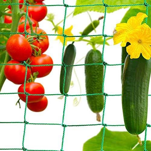Miotlsy Red de Enrejado prémium con Gran Ancho de Malla para el Crecimiento pepinos, Tomates y Plantas trepadoras para jardín y Invernadero
