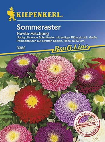 Kiepenkerl Sommeraster 'Lady