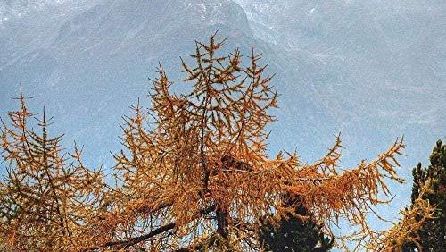 HZDXT® Puzzle 1000 Stück Erwachsene Und Kinder-Nadelbaum Baum-Geschenk Stressabbau Intellektuell P?dagogisch Kreativ Spielhaus Home Decoration 75X50Cm