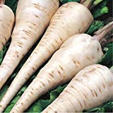 David's Garden Seeds Parsnips White Spear 5462 (White) 200 Non-GMO, Open Pollinated Seeds