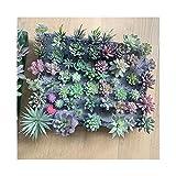 QHKS Planta de Acuario 12pcs / Set Artificial suculentas Falsas Plantas de imitación de Las Flores Mini PVC simulado Florales Craft Home Office Decor (Size : 12pcs)