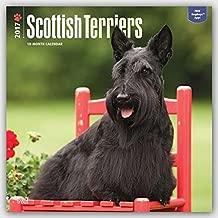 Scottish Terriers - 2017 Calendar 12 x 12in