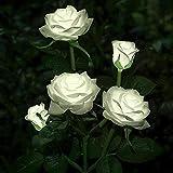 CUIFULI Luces LED solares de flores de rosas para exteriores, funciona con energía solar para decoración de jardinería, patio, tumba, cementerio, balcón, decoración de Navidad, color blanco